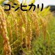 画像2: コシヒカリ[玄米]10kg (2)