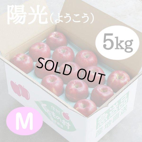 画像1: 陽光 5kg: M (1)
