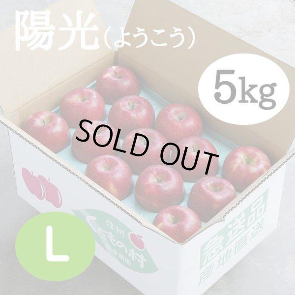 画像1: 陽光 5kg: L (1)